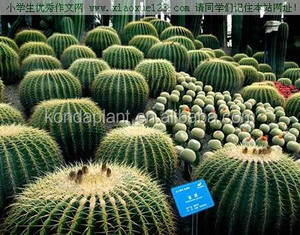 Indoor And Outdoor Decoration bonsai Cactus Plants Wholesale Cactus And Succulents Cactus artificial Plants