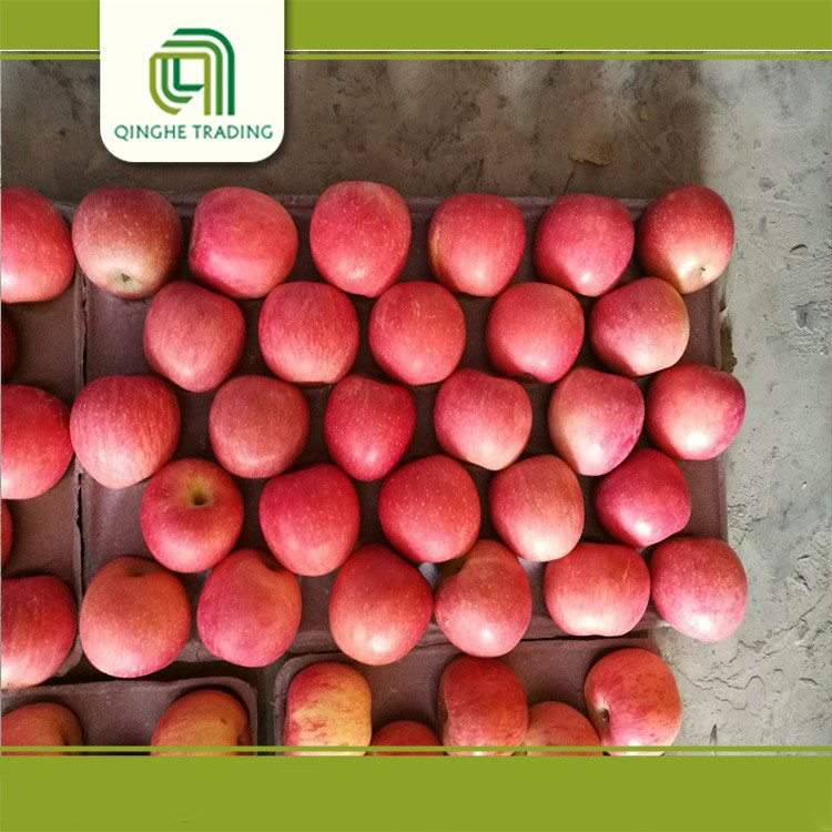 Hot selling fresh grade a fuji apples produced in shandong hot sales for sale