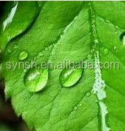 natural Mentha Piperita Leaf Extract