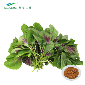 Red Spinach Extract, Red Spinach Extract Powder, Red Spinach Powder