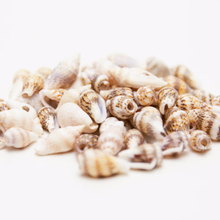 Wholesale 28-38MM Drilled Brown Tiger Natural Shell Beads Loose Spacer Beads For Jewelry Making