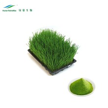 Free sample Organic barly grass extract 4:1-20:1 wheat grass extract from cGMP factory