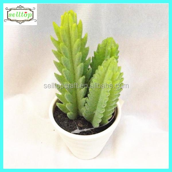 68cm New Design Hot Sale Large Cactus Indoor Plants