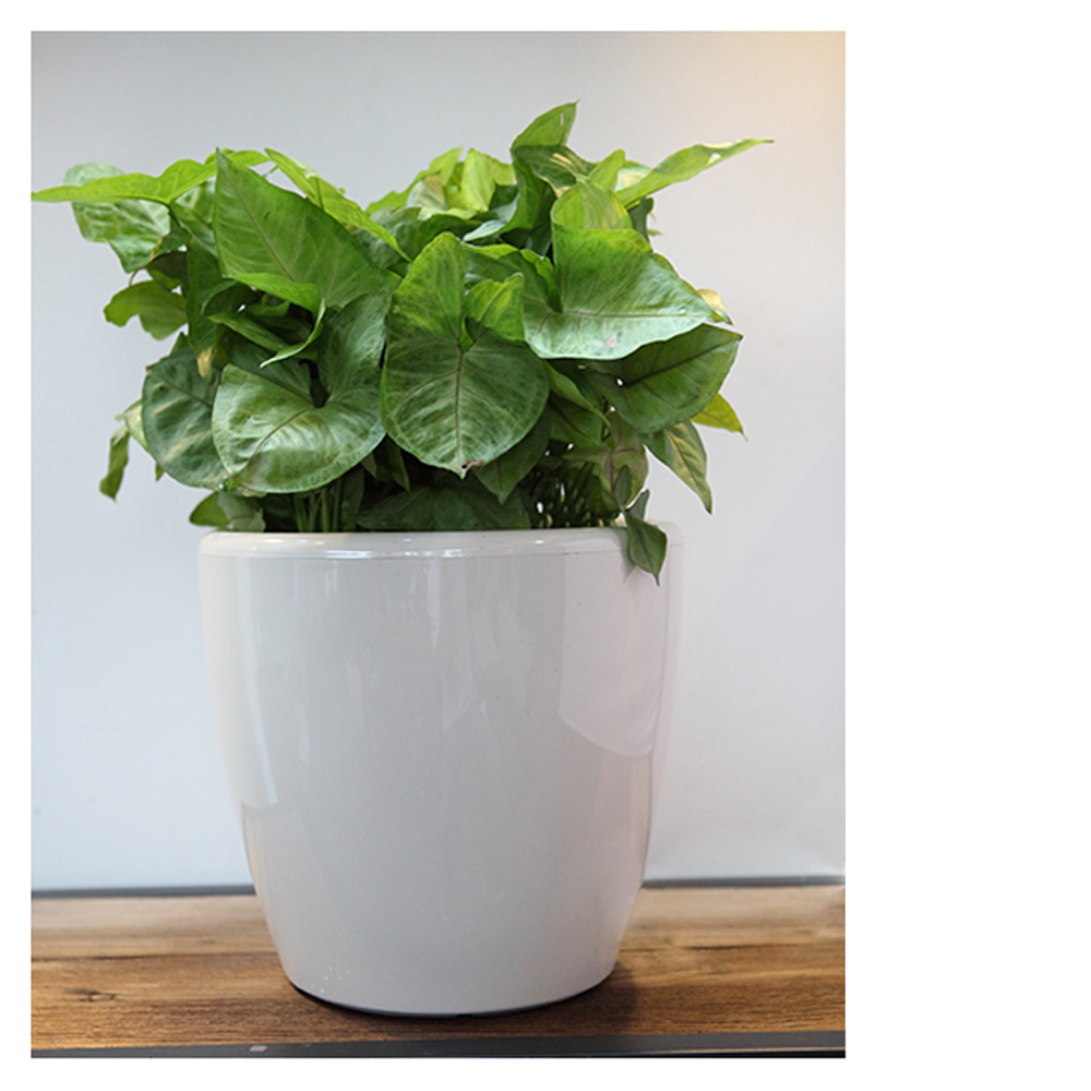Garden Pots Dish Garden Pots Dish Garden Pots Suppliers And Manufacturers At