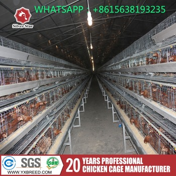 Modern Design Chicken Poultry Farming Equipment In Qatar Buy Poultry Farming Equipment In Qatar Chicken Poultry Farming Equipment Chicken Equipment