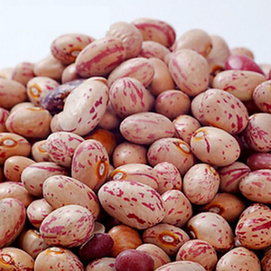 America speckled cranberry bean with round shape