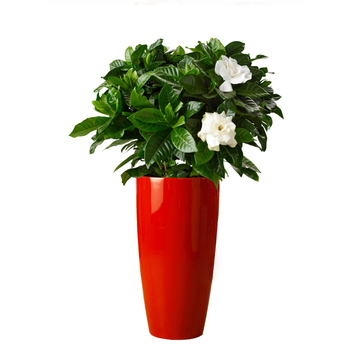 Paper Mache Flower Pots Planters From China Famous Supplier Buy