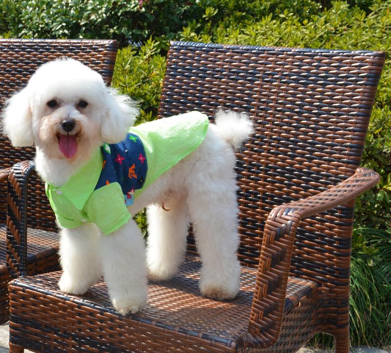 Лето стиль печать джинсы домашнее животное собака футболки собака одежда