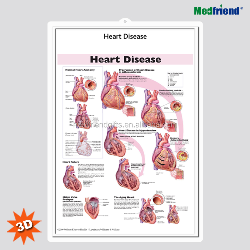 Anatomy Of The Heart 3d Poster, Anatomy Of The Heart 3d Poster ...