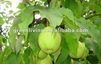 NEW CROP China fresh fruit JUICY YA PEAR