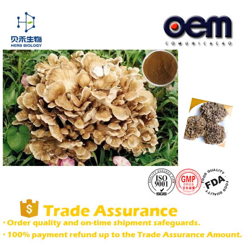 OEM service 100% nature high quality maitake mushroom extract factory supplier Maitake extract capsules