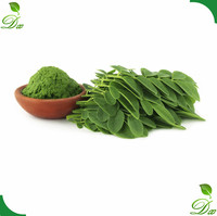 Miracle Plant Extract Moringa Leaf Extract Powder for Medicine Use