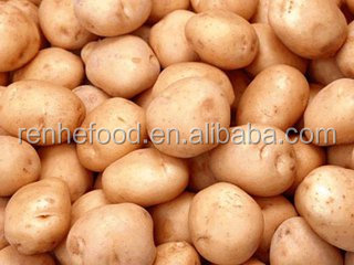 2016 Netherlands Fresh Potatoes, Sweet Potato For Sale..