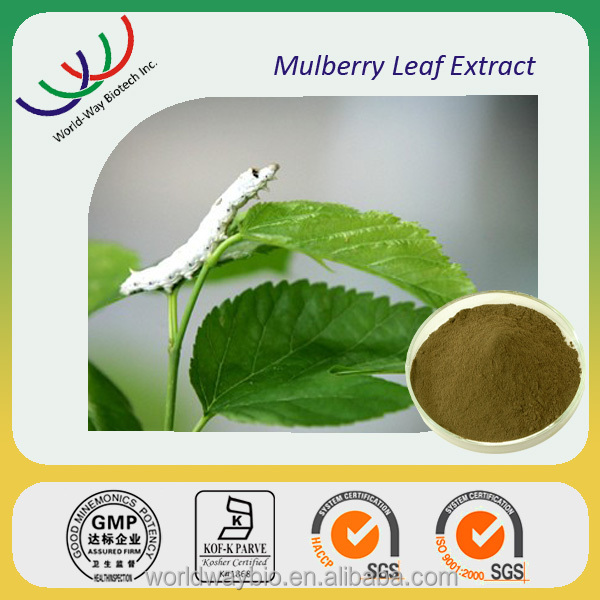 Free sample GMP HACCP China factory supply natural safety herbal medicine extract mulberry leaf extract 20% polysaccharides