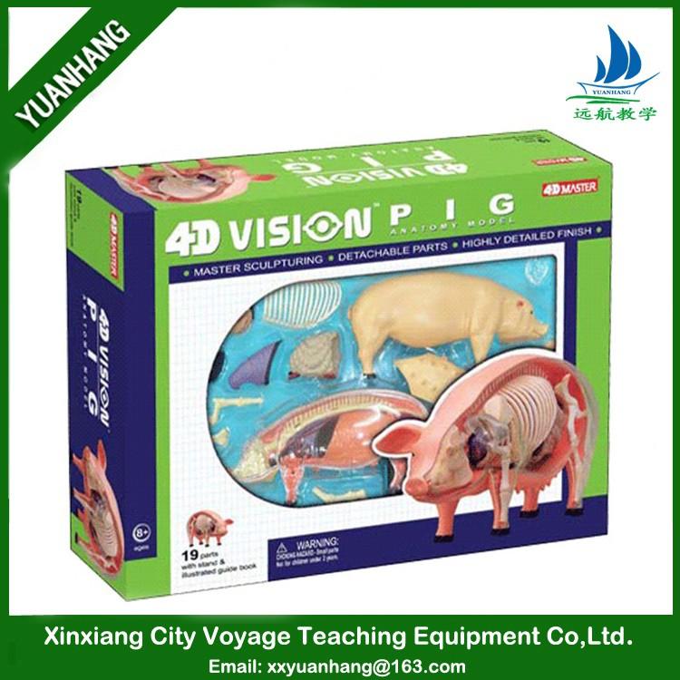 4d Tier Anatomie Modell Für Medizin Lehre Und Medizin Ausbildung ...