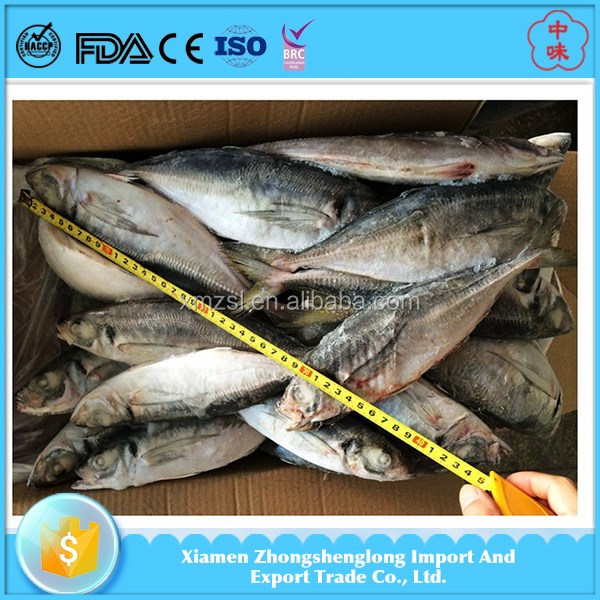 Frozen fresh seafood 20cm horse mackerel fish products for Opah fish price