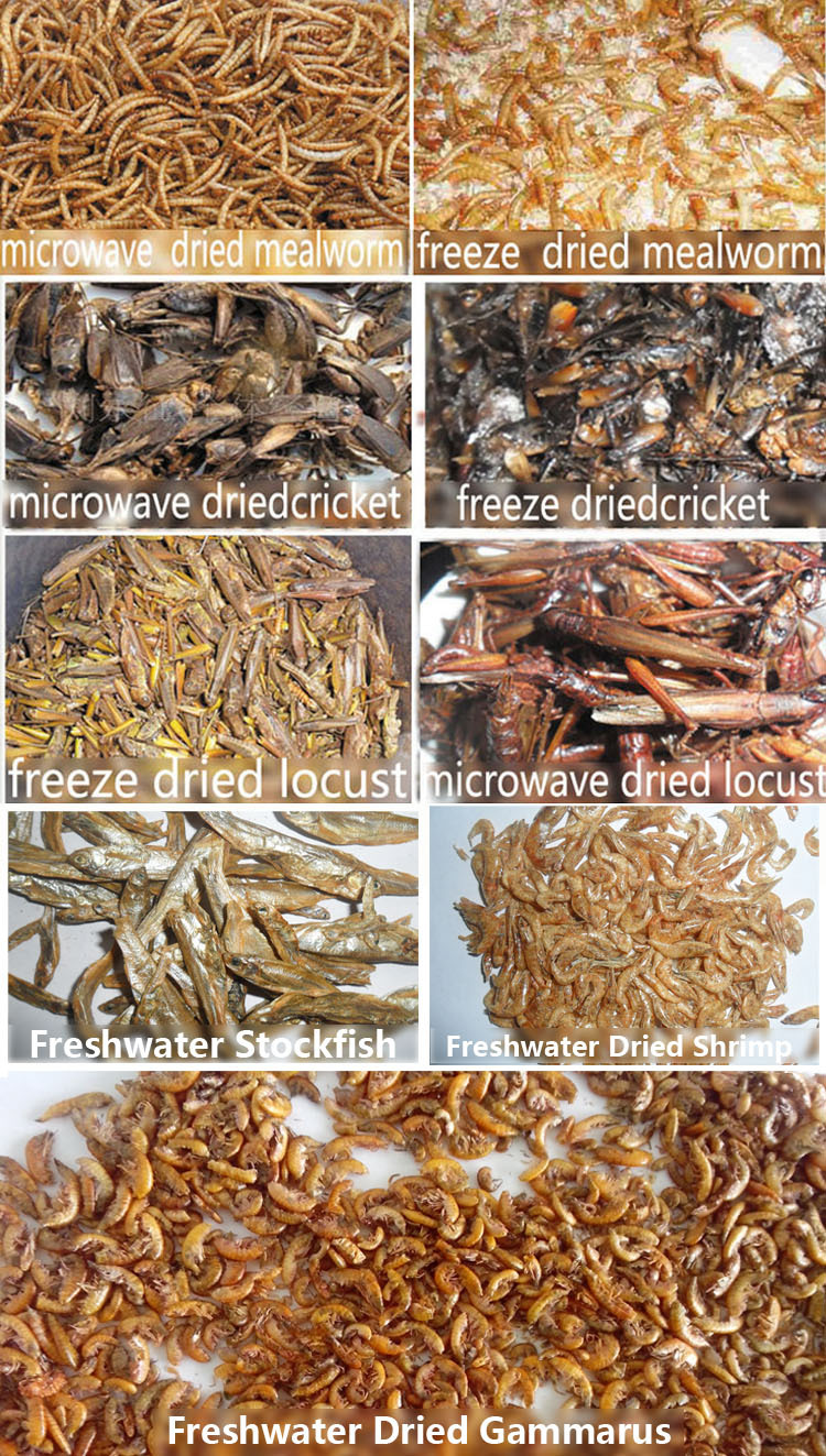 first grade freeze dried mealworm for sale pet food