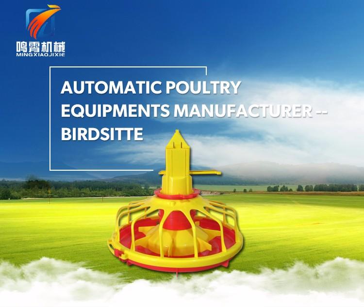Large Scale Automatic Poultry Farm Design Buy Automatic