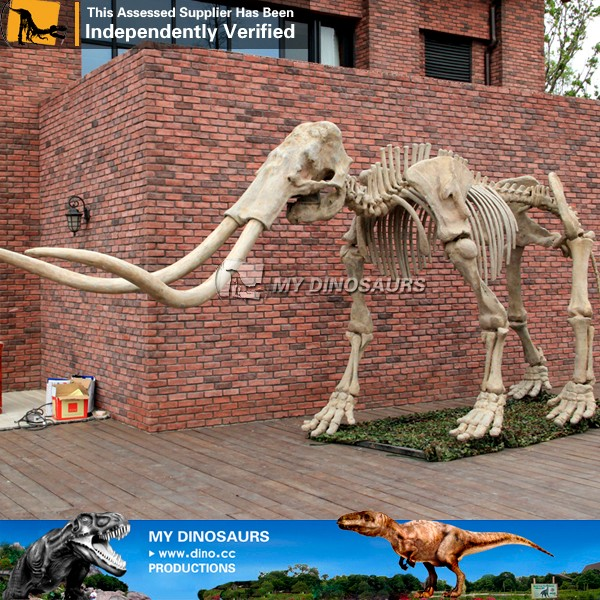 My-Dino mammoth skeleton bone model for display