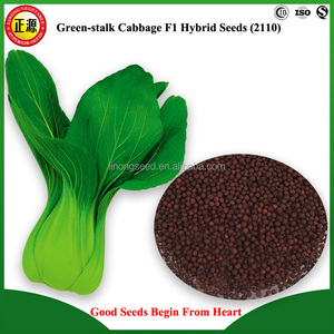 Good quality and high yield XY chinese vegetable seeds F1 hybrid  green-stalk cabbage seeds