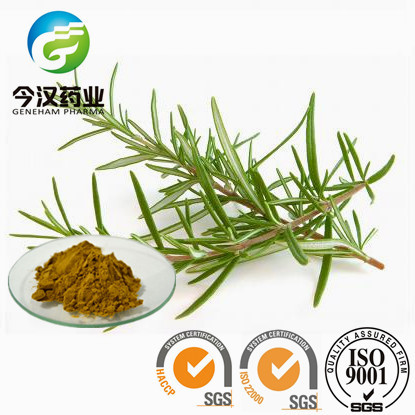 rosemary extract rosmarinic acid liquid food preservatives