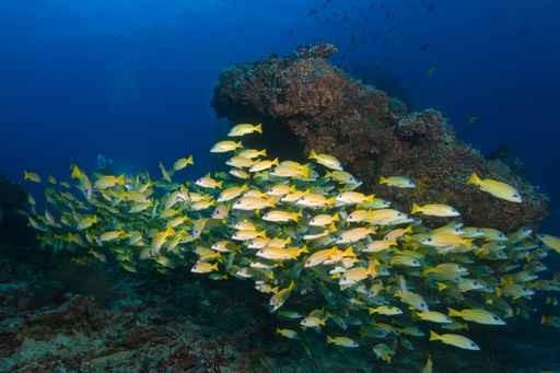 Denizaltı Dünyası Güzel Resim Boyamagüzel Deniz Suluboya Resim