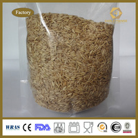 Top Quality Oat Grain