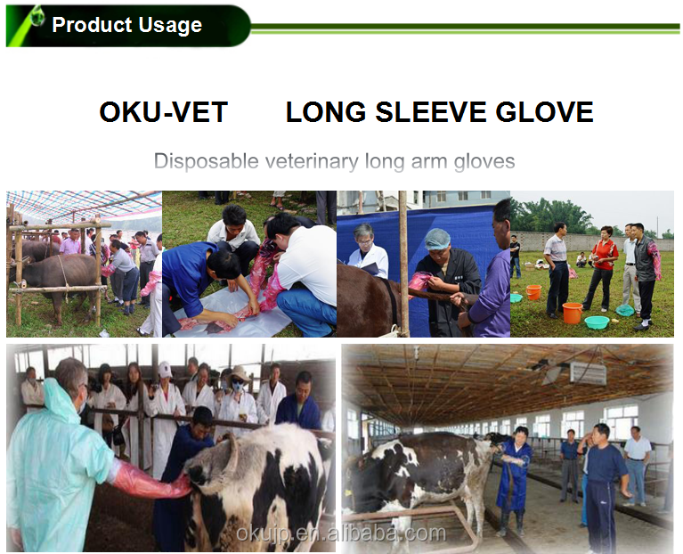Manufacturer of LDPE 90cm full arm plastic disposable long veterinary gloves for A.I.