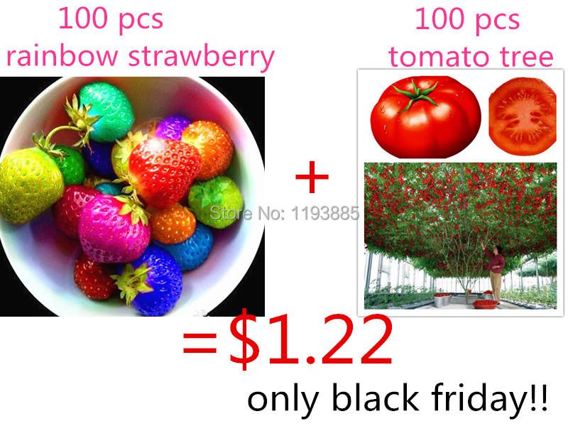 $1.22 get 100 rainbow strawberry seeds and 100 tomato tree ...