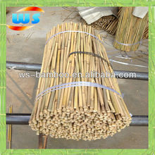 Bamboo sticks used in the orchard flower plant