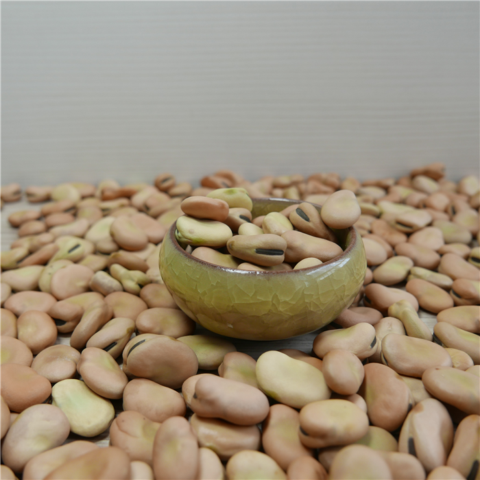 Broad bean in 2019 new season/dried light yellow broad bean faba beans for food