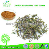 Fineleaf Schizonepeta Herb Extract, Fineleaf Schizonepeta Herb P.E., Natural Fineleaf Schizonepeta Herb Extract