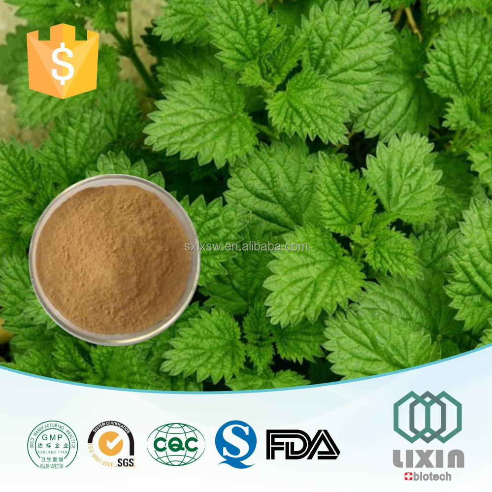 Gmp Low Price Nettle Leaves Extract,Nettle Root Extract Beta ...
