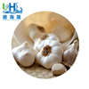 /product-detail/chinese-natural-flavor-spicy-best-selling-fresh-white-garlic-for-wholesale-60728181042.html