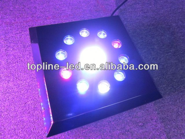 popular with the customers for coral lighting DC 12V LED Aquariums Refugium verlichting