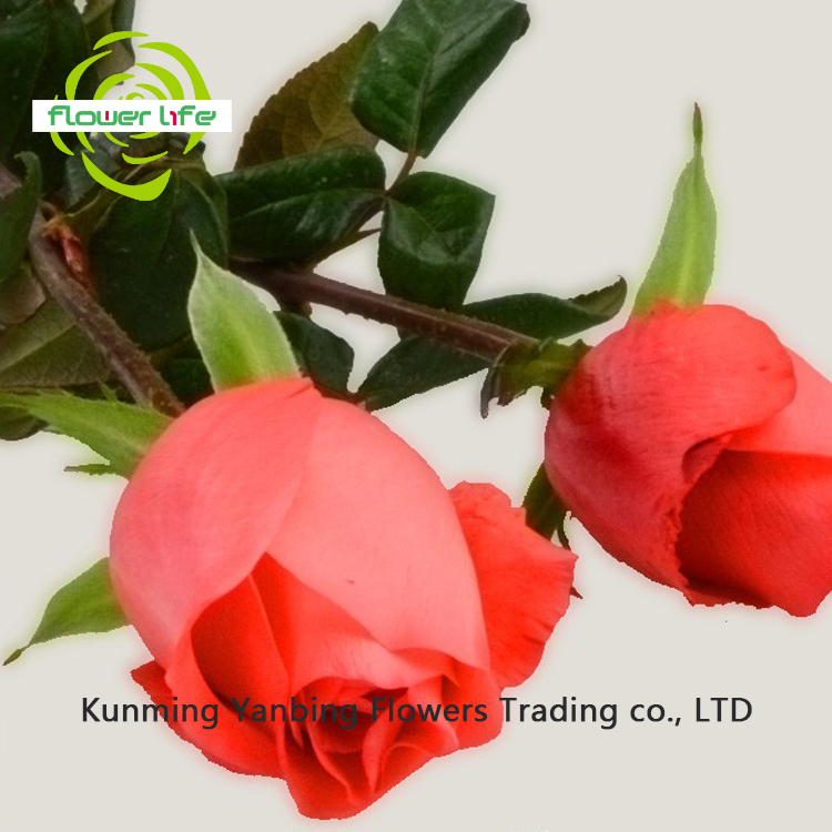 Elegant High Quality Decorative Flower And Import Natural Flower Rose Movie Star Peony Cut Fresh Flower