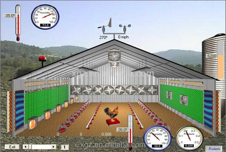Chicken poultry house with automatic drinkers and feeders