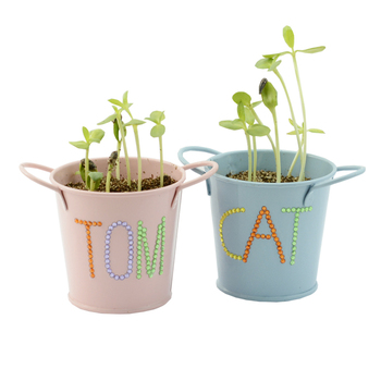 Grow Your Own Garden Kit Indoor Mini Plant For Kids Kits Product On Alibaba