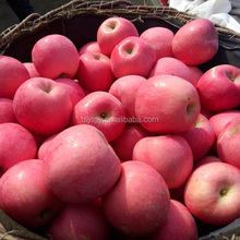 High Quality Fresh Fuji Apple China Fuji Apple Price Fuji apple