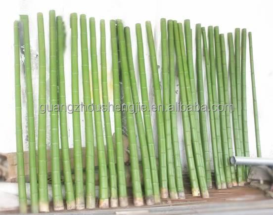 2016 plantas ornamentales wholesalesartificial cerca de - Cana bambu decoracion ...