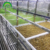 Hydroponic fodder growing system/Nutritious Sprouted Barley Fodder Hydroponic  System