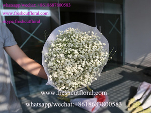 Export The Artificial Pressed Dried Flowers For Order Flowers Online Birthday With Reasonable Price