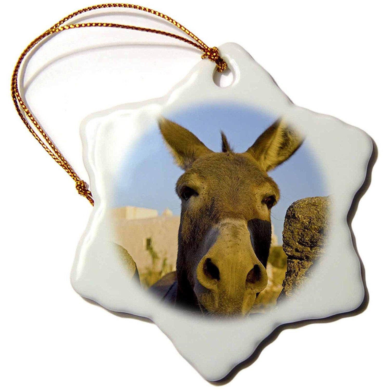 Hora Donkey and Stone Fence EU12 Dgu0093 Darrell GuLIn Ceramic Tile Coasters 3dRose cst/_81827/_3 Greece Mykonos Set of 4