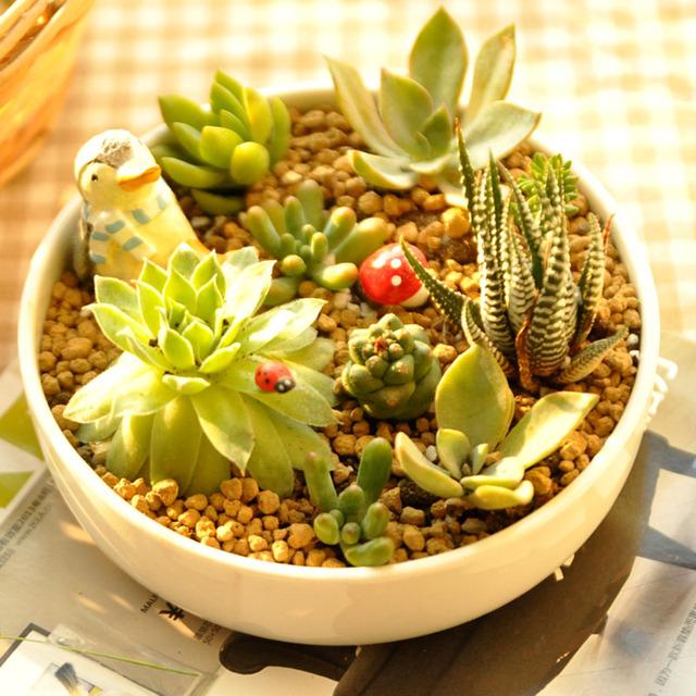 livraison gratuite charnues fleur plante pot fleurs style. Black Bedroom Furniture Sets. Home Design Ideas