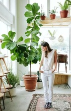 Indoor Tree Pots Supplieranufacturers At Alibaba