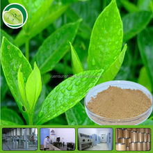 Bulk green tea Extract P.E. Powder/Green Tea Polyphenols Extract powder UV 10%-98%