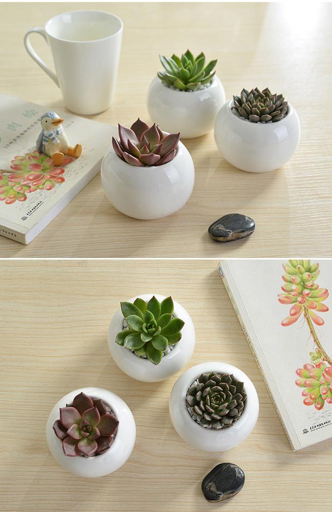 Indoor 2 Inch Round White Mini Ceramic Planters Buy Mini