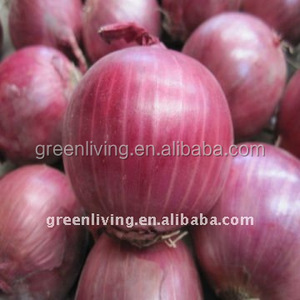 fresh vegetable of red onion in 10kg carton box for food dubai importers