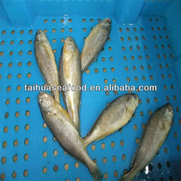 seafood kinds of fish frozen fish