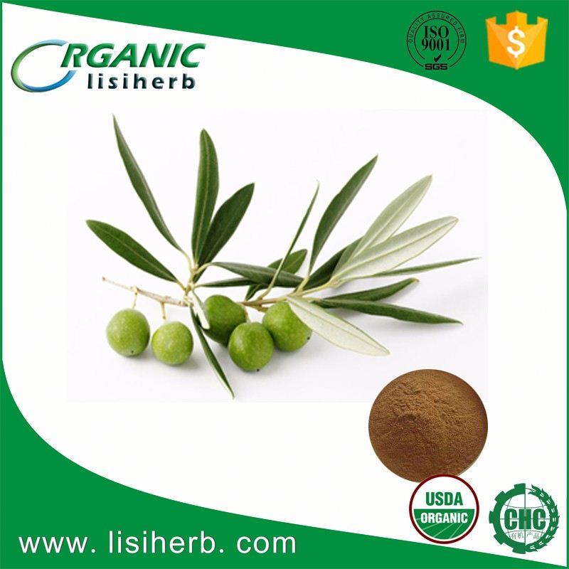 100% high quality oliver leaf extract
